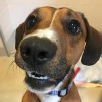 Adopt A Pet :: Johnny - South Burlington, VT
