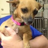 Adopt A Pet :: Tina - Irmo, SC