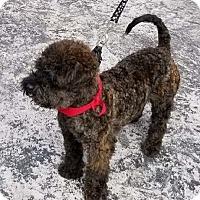 Adopt A Pet :: Ben - San Diego, CA