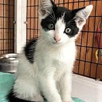 Adopt A Pet :: Razz - Chattanooga, TN