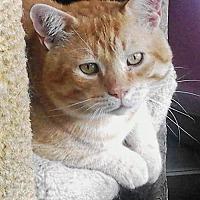 Adopt A Pet :: Steve aka Scrappy - Eldora, IA