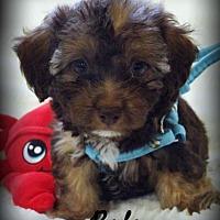 Adopt A Pet :: Rolo - Anaheim Hills, CA