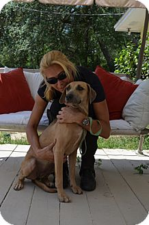 Doberman Pinscher Mix Dog for adoption in Eustis, Florida - Heidi