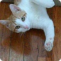 Adopt A Pet :: Laurel - Kensington, MD
