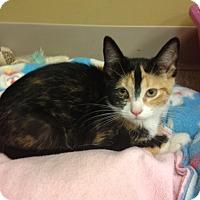 Adopt A Pet :: Carrie - Byron Center, MI