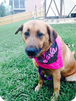 Shepherd (Unknown Type) Mix Dog for adoption in Franklin, Tennessee - Lexie