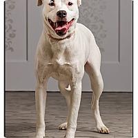 Adopt A Pet :: Leela -DRD program - Owensboro, KY