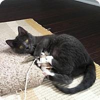 Adopt A Pet :: Char - Byron Center, MI