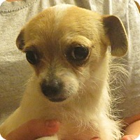 Adopt A Pet :: Josephine - Salem, NH