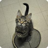 Adopt A Pet :: Malcolm - Rockaway, NJ