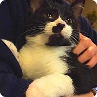 Adopt A Pet :: Isaac- At PetSmart - Oberlin, OH