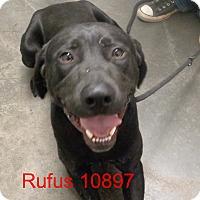 Adopt A Pet :: Rufus - Greencastle, NC