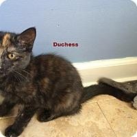 Adopt A Pet :: Duchess - McDonough, GA