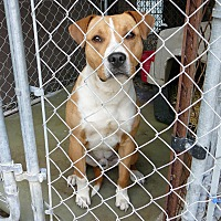 Adopt A Pet :: RUDY - New Plymouth, ID
