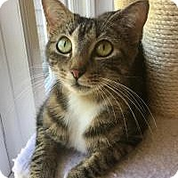 Adopt A Pet :: Sophia - Duluth, GA