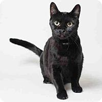 Adopt A Pet :: DOT - San Francisco, CA