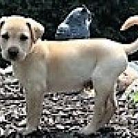 Adopt A Pet :: **ARNOLD** - Mukwonago, WI