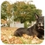 Photo 3 - German Shepherd Dog Dog for adoption in Wayland, Massachusetts - Angel