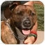 Photo 3 - American Pit Bull Terrier Mix Dog for adoption in Berkeley, California - Dynamite