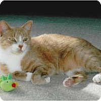 Adopt A Pet :: Parker - Warminster, PA