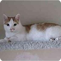 Adopt A Pet :: Barley - Colmar, PA