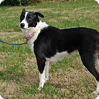 Adopt A Pet :: Veda - Wytheville, VA