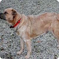 Adopt A Pet :: Misha - Holland, MI