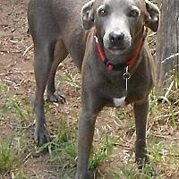Adopt A Pet :: Dusty - Wallis, TX