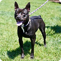 Adopt A Pet :: Millie - St. Charles, MO