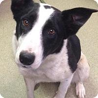 Adopt A Pet :: Eleanor - Valley Falls, KS