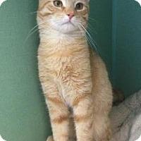 Adopt A Pet :: Clark - Philadelphia, PA