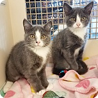Adopt A Pet :: Captain Morgan and Mikado - Orland Park, IL