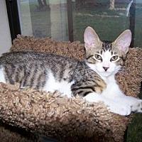 Adopt A Pet :: Louie 2 - Bulverde, TX