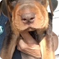 Adopt A Pet :: Jasmine - Kalamazoo, MI
