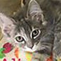 Adopt A Pet :: Alice - Warren, PA