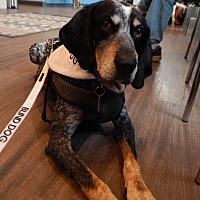Adopt A Pet :: Bocelli - Washington, PA