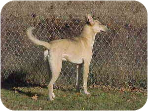 Shepherd (Unknown Type) Mix Dog for adoption in Gladwin, Michigan - Shepherd Mix