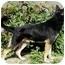 Photo 2 - German Shepherd Dog Mix Dog for adoption in Los Angeles, California - Carrington von Malibu