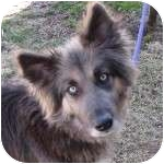 Shepherd (Unknown Type) Mix Dog for adoption in Eatontown, New Jersey - Giselle
