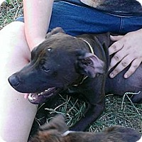 Adopt A Pet :: Greeny - Linton, IN