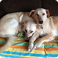 Adopt A Pet :: Kate and Allie - New Canaan, CT