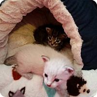 Adopt A Pet :: Jill (Tiny Gem) - Ocala, FL