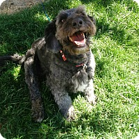 Adopt A Pet :: Willie Nelson - Meridian, ID