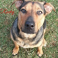 Shepherd (Unknown Type) Mix Dog for adoption in Lake Charles, Louisiana - Rocky