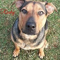 Adopt A Pet :: Rocky - Lake Charles, LA