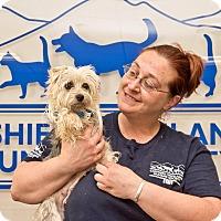 Adopt A Pet :: Caroline - Cashiers, NC