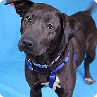 Adopt A Pet :: Meg - Minneapolis, MN