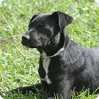 Adopt A Pet :: Digger - Monroe, NC