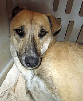 Hound (Unknown Type) Mix Dog for adoption in Santa Fe, New Mexico - Arroyo