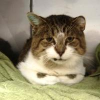 Adopt A Pet :: Desole - Saskatoon, SK